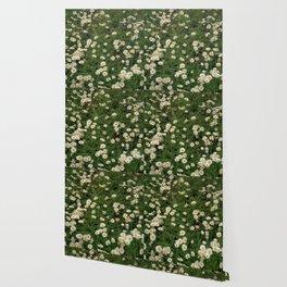 Daisy Garden Wallpaper