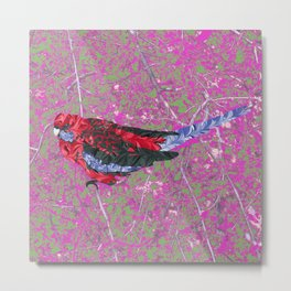 Crimson Rosella Wild Bird Metal Print