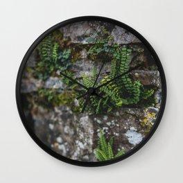 Ferns in the Rock Wall Clock