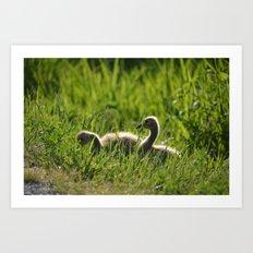 Goslings in the Grass Art Print