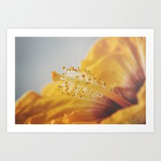 Golden Hibiscus Art Print