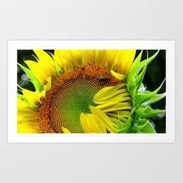 Sunflower Morning Art Print