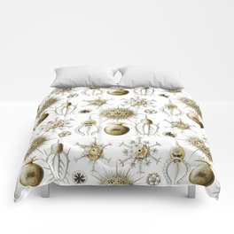 Ernst Haeckel - Phaeodaria Comforters