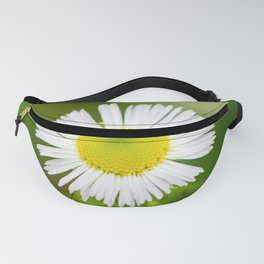 Bellis perennis is a common daisy Fanny Pack