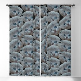 cute collage pattern shorthair grey cat Blackout Curtain