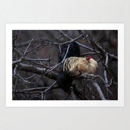 Sleeping Rooster Art Print