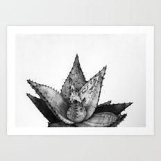 Nature aloe Art Print