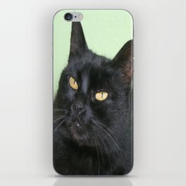 Relaxed Black Cat Portrait  iPhone Skin