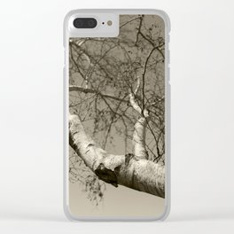 Birch tree #01 Clear iPhone Case