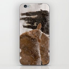 Calves in The Snow iPhone Skin