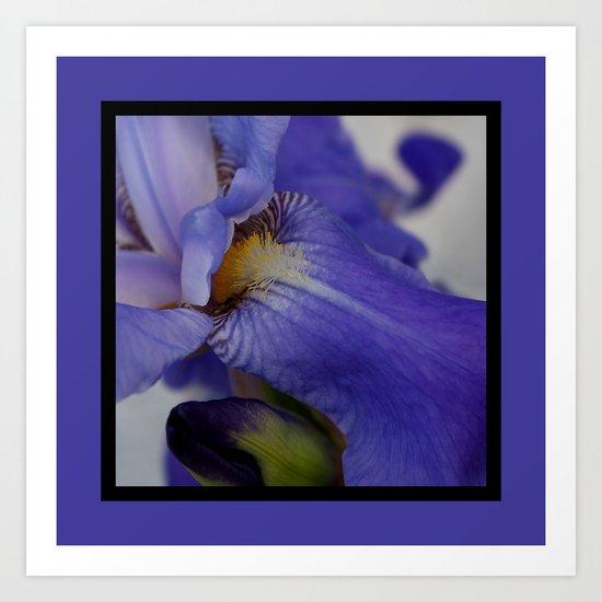 zebra iris 'tongue' (square) Art Print