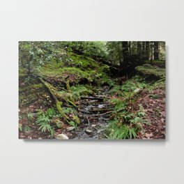 Ferns and Mosses Metal Print
