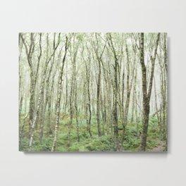 Glendalough Forest Metal Print