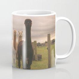 Alpacas at Tio Farm Coffee Mug