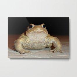 Common European Toad Metal Print