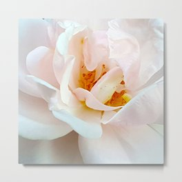 Finale - Last White Rose of the Summer Metal Print