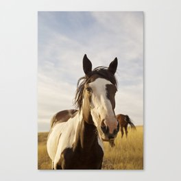 Western Paint Horse Canvas Print