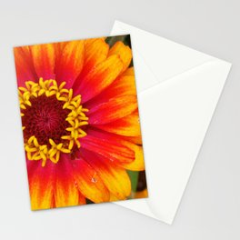 The Zinnia Flower Stationery Cards