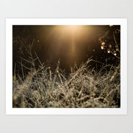 Mid Winter Haze Art Print