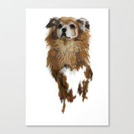 rossi foxy Canvas Print