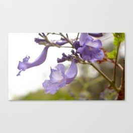 Lilac Explosion Canvas Print