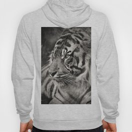 The mysterious eye of the tiger. BN Hoody