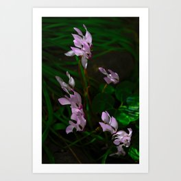 Flowers Amongst Grass Art Print