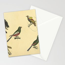 041 paradisea magnifica Superb Bird of paradise trogon curucu Guinea Turaco Common Cuckoo10 Stationery Cards