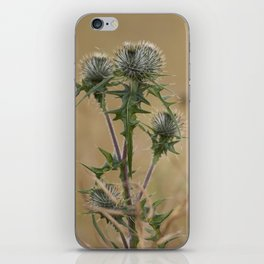 Spear Thistle iPhone Skin