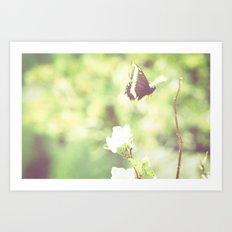 Butterfly Pavilion Art Print
