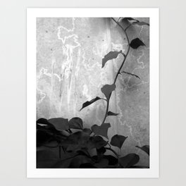 Ivy on Concrete Art Print