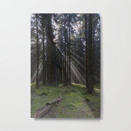 Spruce Wood Sunrays Metal Print