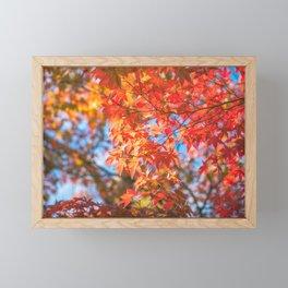 Autumn foliage in a maple tree at Kinkaku-ji Zen garden in Kyoto Framed Mini Art Print