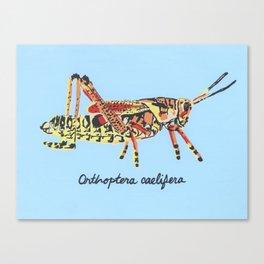 The Common Grasshopper Canvas Print