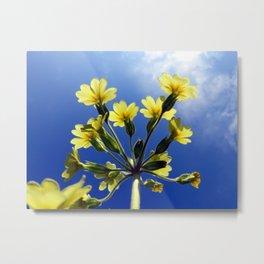 Yellow Flowers Blue Sky Metal Print