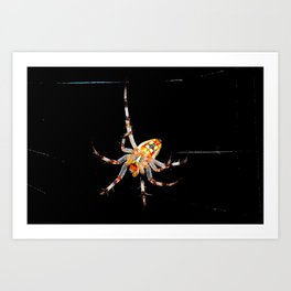 The Spiders Web Art Print