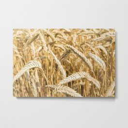 Farmers Best Metal Print