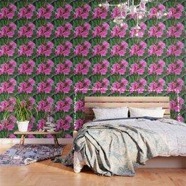 Pink Oleander Bouquet Closeup  Wallpaper