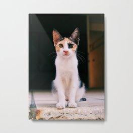 Little stray kitten Metal Print