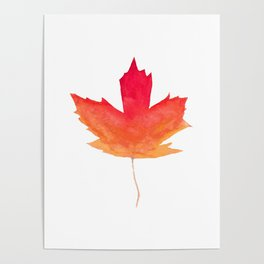 Canada Red Maple Magic Poster