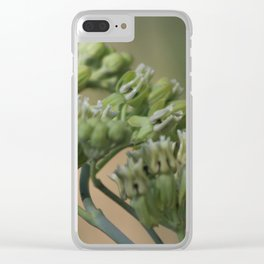 Closeup of Desert Milkweed at Sunnyland Garden in Rancho Mirage Clear iPhone Case