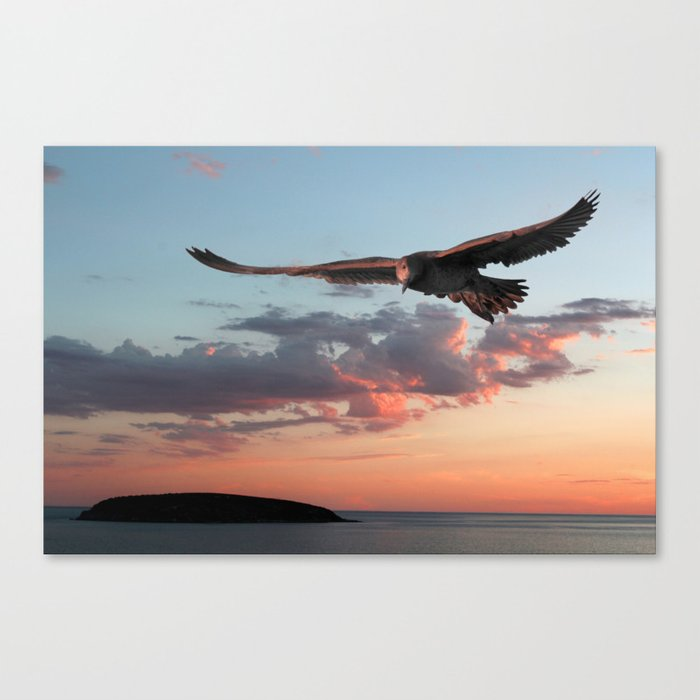 Evening Albatross Canvas Print