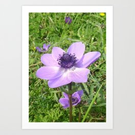 One Delicate Pale Lilac Anemone Coronaria Wild Flower Art Print