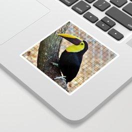 Swainson's Toucan Sticker