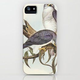 New Holland Goshawk (Astur Nova-Hollandix) illustrated by Elizabeth Gould (1804–1841) for John Gould iPhone Case