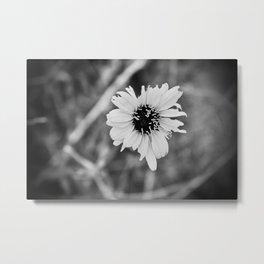 Black And White Sunflower Metal Print