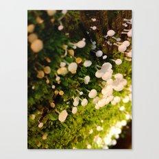 Cute Little White Mushrooms Canvas Print