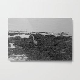 Grey Heron Donegal Ireland bw Metal Print
