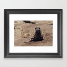 elephant seal pup Framed Art Print