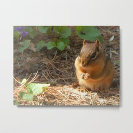 Chubby chippy Metal Print